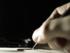 aantal euthanasie verzoeken gestegen